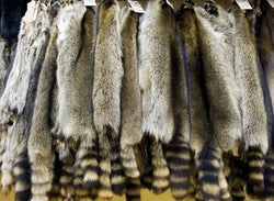 Raccoon Fur