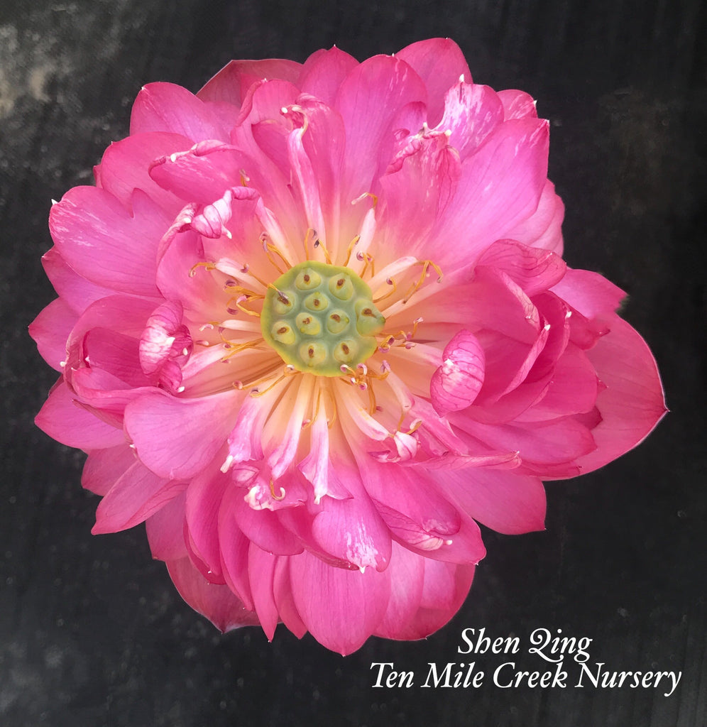 Deepest Loving - Ten Mile Creek Nursery