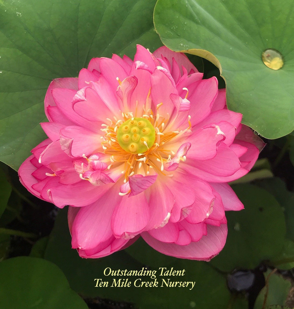 Outstanding Talent - Ten Mile Creek Nursery