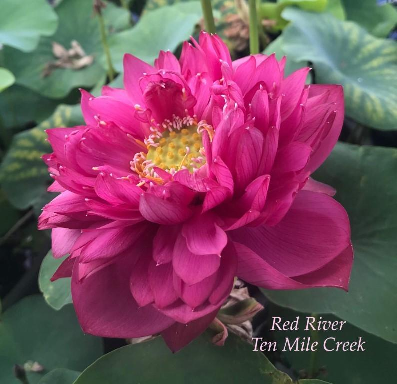 Red River - Ten Mile Creek Nursery