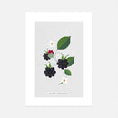 Blackberry Print by Sally Caulwell
