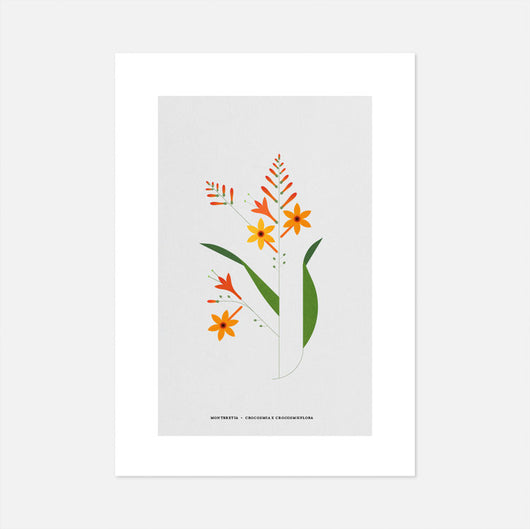 Montbretia Print by Sally Caulwell