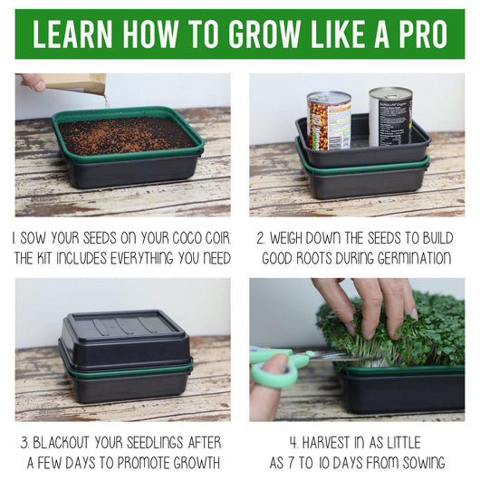 The 'Starter' Grow Kit