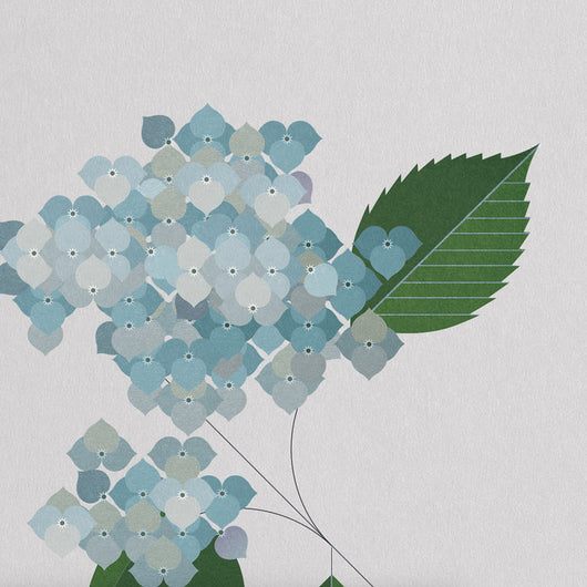 Hydrangea Print by Sally Caulwell