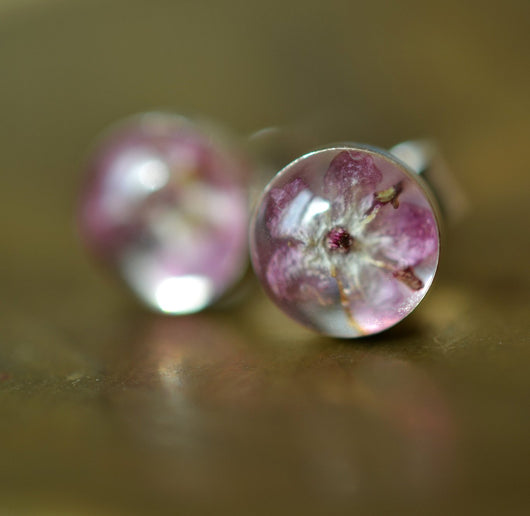 Pink elderflower studs