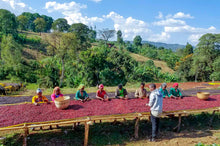 Load image into Gallery viewer, Ethiopia Sidama  -  Organic Dry Process