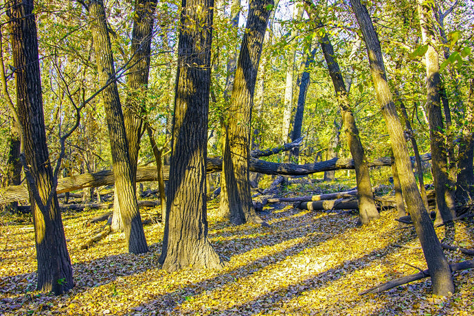 Pawnee Prairie Park: Wichita's Hidden Gem