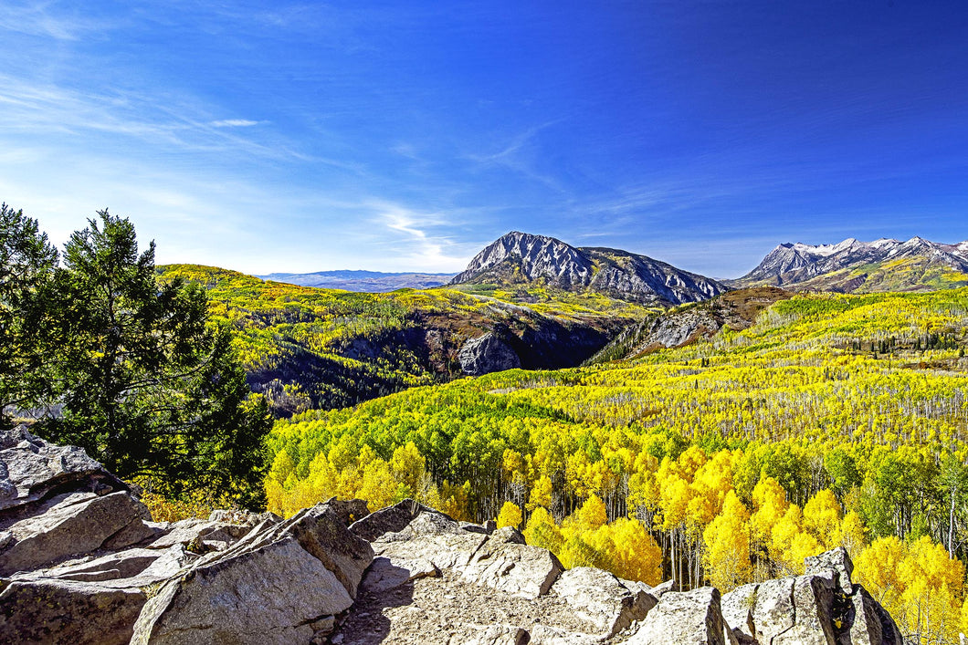 Crested Butte Aspens