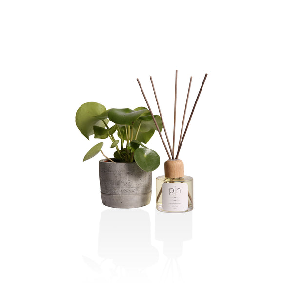 Melon & Cucumber Reed diffuser