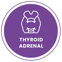 Thyroid / Adrenal