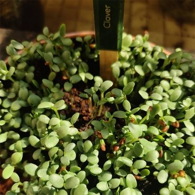 Microgreens sprouting in the first 3 days   A complete guide by Brown Living