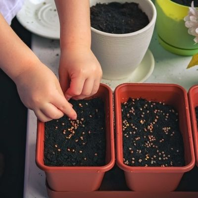 Grow your own food   Microgreens - A Complete guide by Brown Living