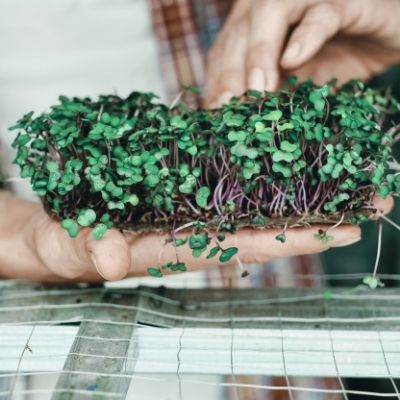 Microgreens   A Complete Guide by Brown Living