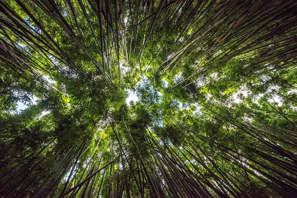 The Amazing Ecological benefits of bamboo