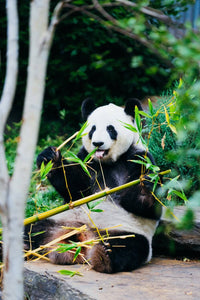 Bamboo Environmental Superstar