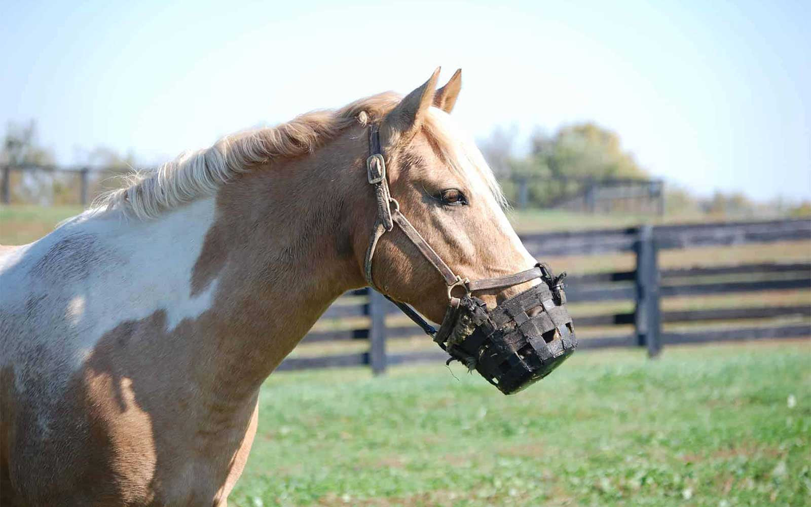 Horse Muzzles - Tips and Tricks for Use-Missy's Bucket