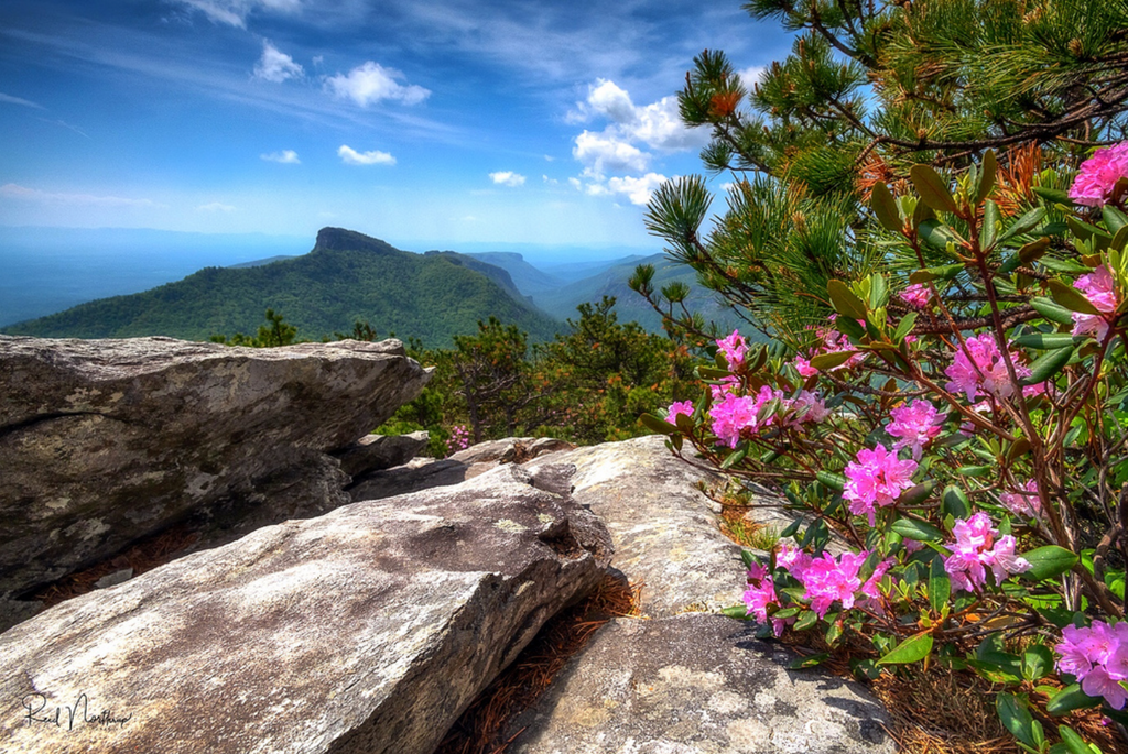 Dig Local Breaking Scoop: Top 5 Spring Hikes to Take Near Asheville