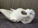 CAT MASK BLANK MISCASTS