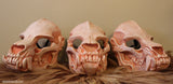 SKULL MASK- BONE COLOR