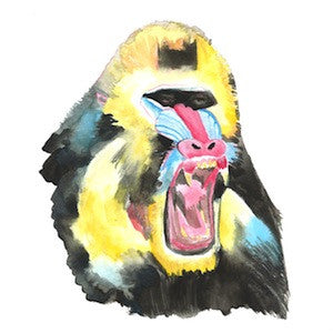 Mandrill 4 by Coral Churchill for $275
