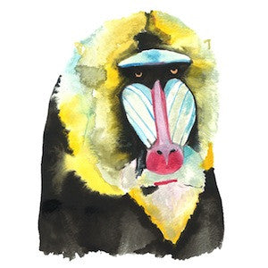Mandrill 1 by Coral Churchill for $275