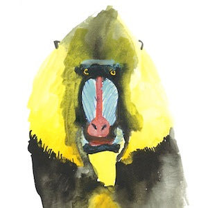 Mandrill 2 by Coral Churchill for $275