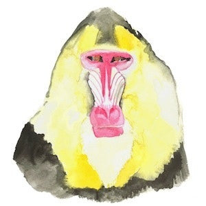 Mandrill 5 by Coral Churchill for $275