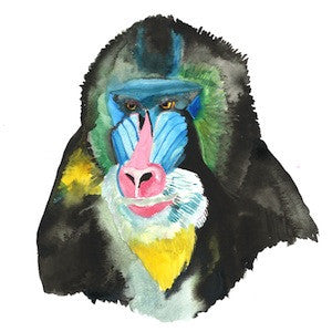 Mandrill 3 by Coral Churchill for $275