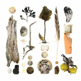 Beachcombing 61 by Jennifer Steen Booher for $275