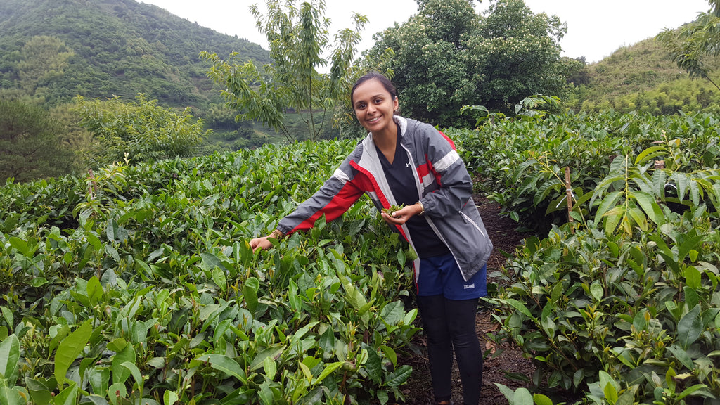 Zhenghe, Fujian Part II: My Day at the Tea Farm