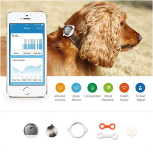 Ensure a Fit Dog with P2 Activity Tracker