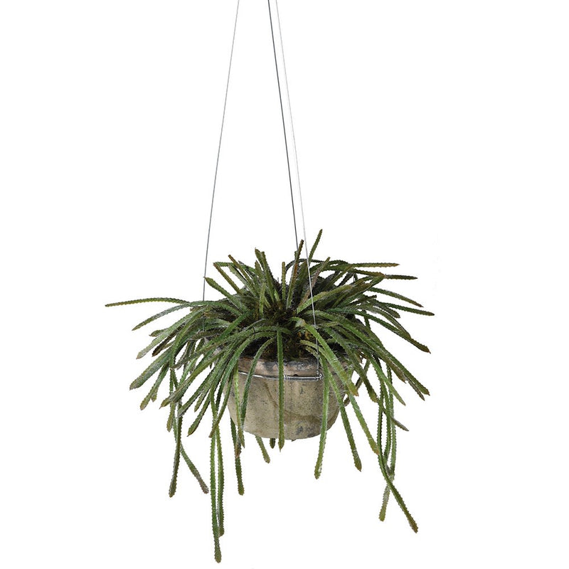 Hanging Potted Succulent | Design Vintage
