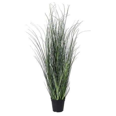 Green Onion Grass Plant