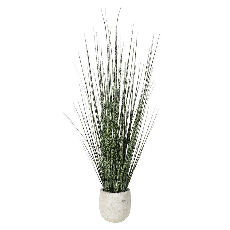 Onion Grass in Cement Pot