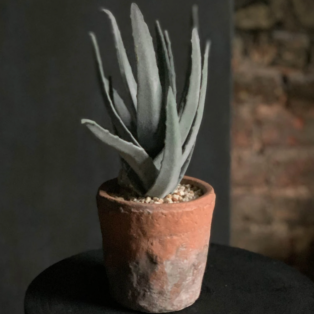 Abigail Ahern Mountain Aloe