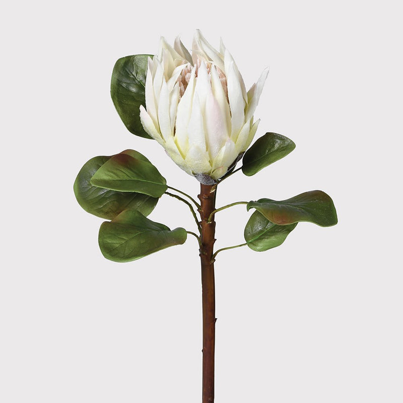 White King Protea | Design Vintage