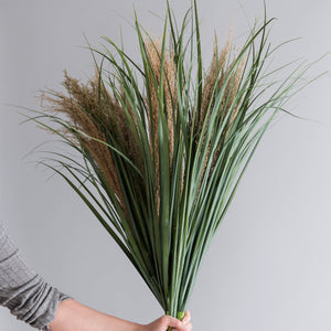 Abigail Ahern Dried Pampas Grass