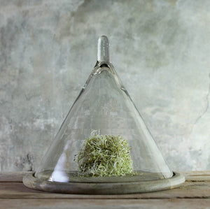 Conical Glass Dome | Design Vintage