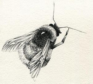 Learn how to draw in Pen & Ink with Claire Harrison