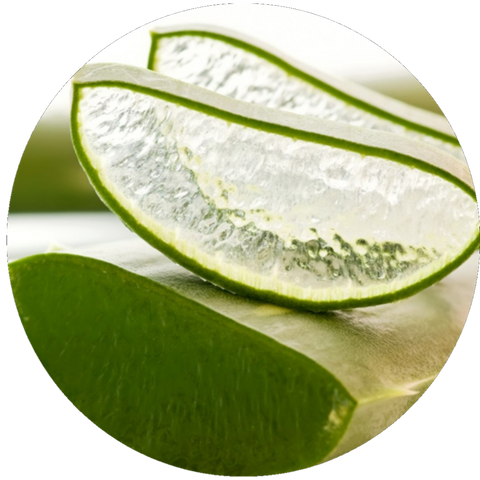 What are Natural Benefits of Aloe Vera- Aromanthi Aromatherapy Hand Sanitizer
