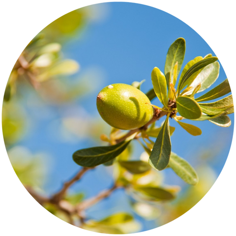 What are natural benefits of argan oil? Mastic Essential Oil Daytime Moisturizer Natural Sunscreen- Aromanthi Aromatherapy