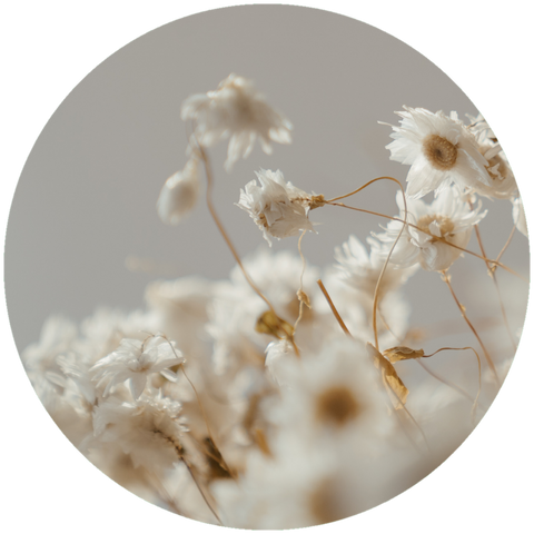 What are natural benefits of chamomile essential oil? Aromanthi Aromatherapy Sleep Wellness Nasal Inhaler
