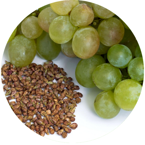What are natural benefits of grapeseed oil? Mastic Essential Oil Daytime Moisturizer Natural Sunscreen- Aromanthi Aromatherapy