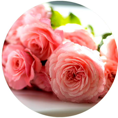 What are natural benefits of rose water? Mastic Essential Oil Daytime Moisturizer Natural Sunscreen- Aromanthi Aromatherapy