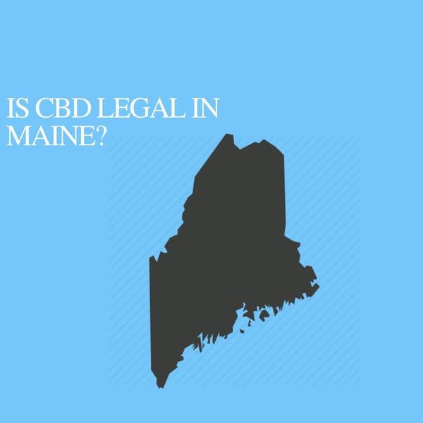 Is CBD Oil Legal in Maine: Where to buy CBD Near Me?