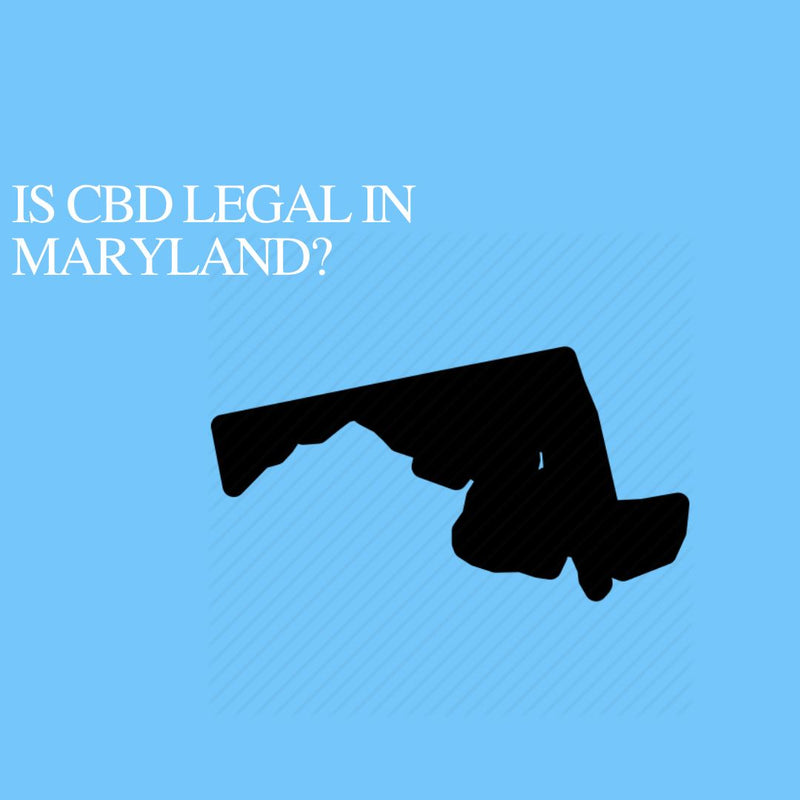 Is CBD Oil Legal in Maryland: Where to buy CBD Near Me?