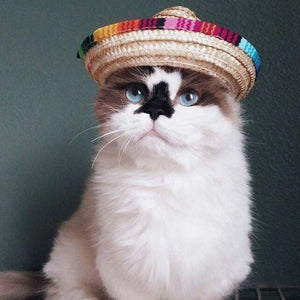 Cat Mexican Straw Sombrero for summer time fun