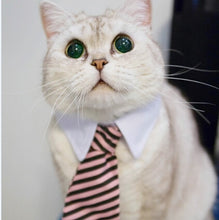 Load image into Gallery viewer, Cat Collar 'Professional Blue-Collar Worker' for Home Costume