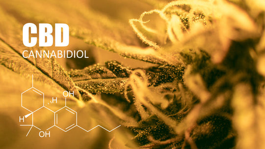4 Surprising CBD Facts You'll Wish You'd Known About Earlier