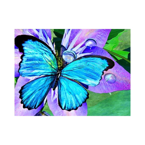 Alan Foxx BUTTERFLIES-Blue Morpho Reflections